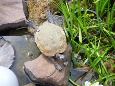 Foto Schildkröte